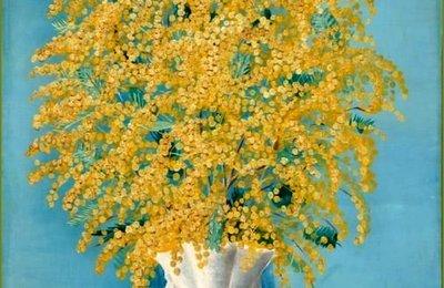 mimosa emile vernon.jpg