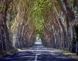 alignement des arbres.jpg