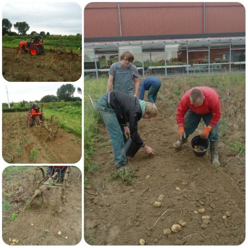 collage récolte pommes de terre.jpg