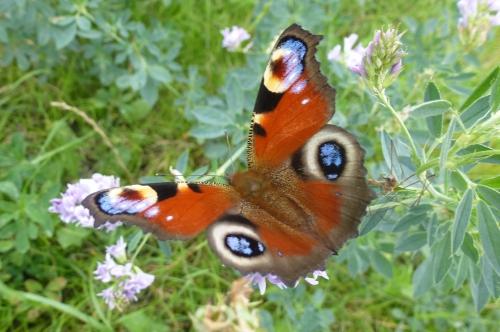 papillons et champs 02 10 2013 002pm.jpg
