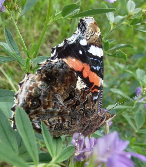 papillons et champs 02 10 2013 039pm.jpg