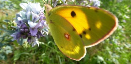 papillons et champs 02 10 2013 132pm.jpg