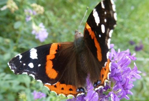papillons et champs 02 10 2013 034pm.jpg