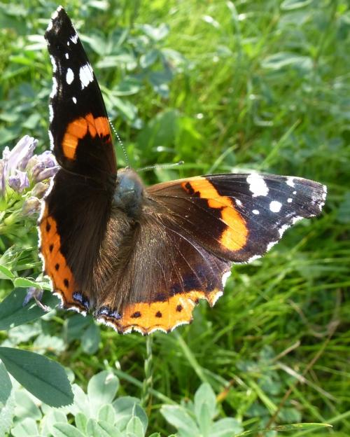 papillons et champs 02 10 2013 144pm.jpg