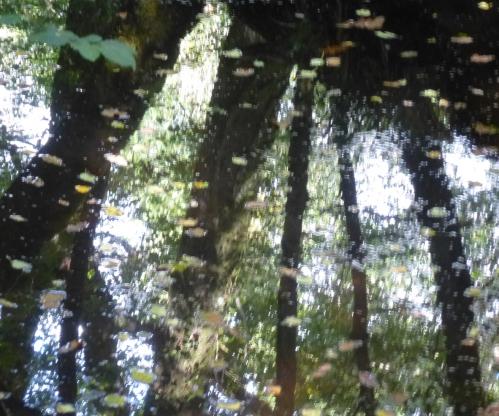 champignons octobre2013 116pm.jpg