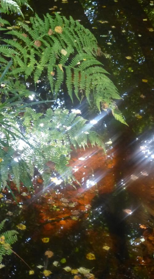 champignons octobre2013 119pm.jpg