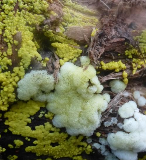 champignons octobre2013 153pm.jpg