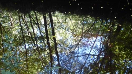 champignons octobre2013 078pm.jpg
