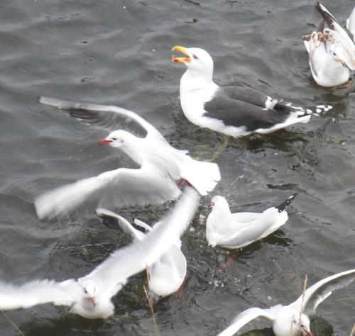 divers déc 2013 affiche oiseaus 004pm.jpg