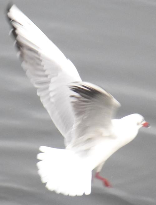 divers déc 2013 affiche oiseaus 002pm.jpg