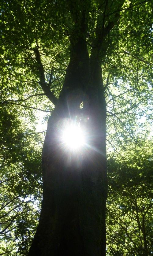 Chaire des druides II et kelouan 096pm.jpg