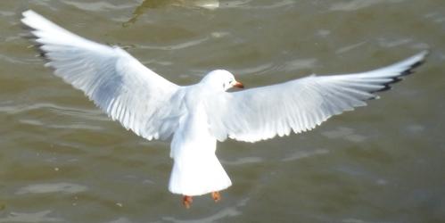 divers et oiseaux janv 2014 dahouet 056pm.jpg