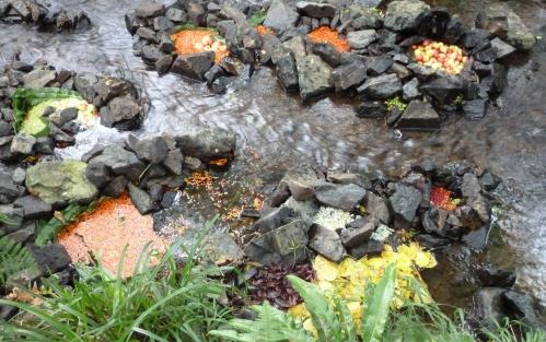 Travail land art flora 216pm.jpg