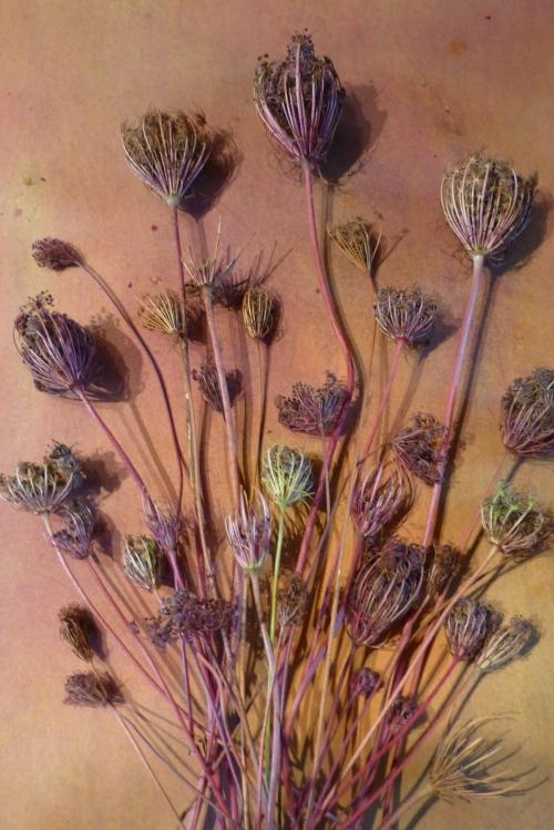 composition florale d'automne 2012 033pm.jpg