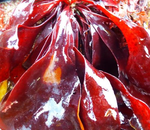 salade et algues  mars 2014 187pm.jpg