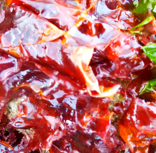 salade et algues  mars 2014 234pm.jpg
