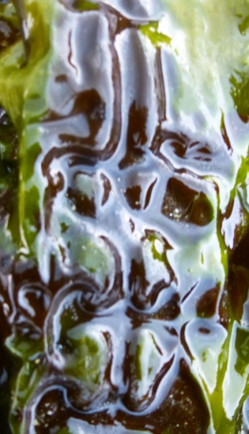salade et algues  mars 2014 243pm.jpg