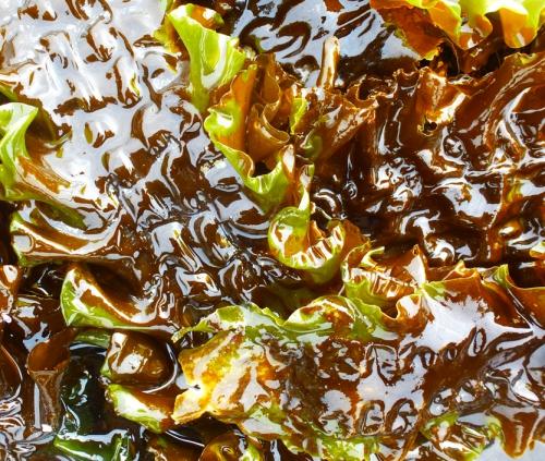 salade et algues  mars 2014 111pm.jpg