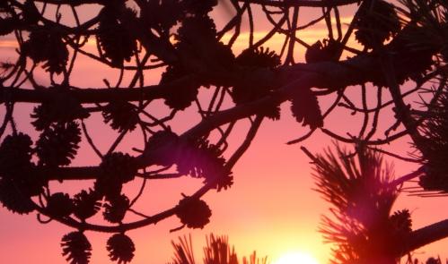 coucher de soleil juillet 2014 142pm.jpg