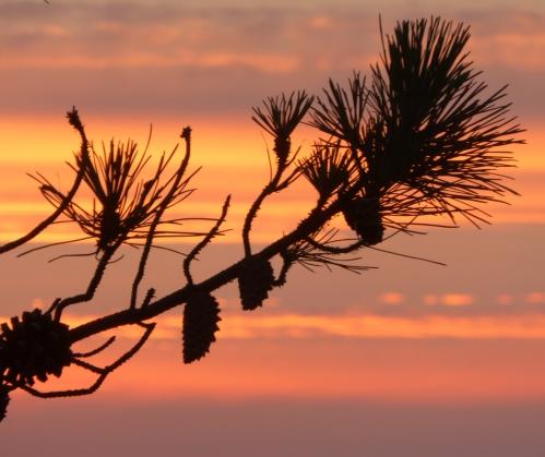 coucher de soleil juillet 2014 158pm.jpg