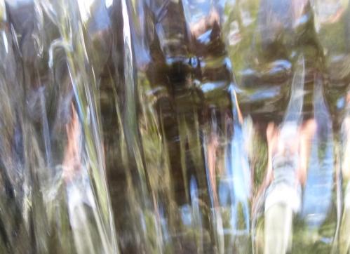 FLORA  6 Sept 2014 002pm.jpg