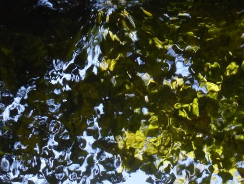 FLORA  6 Sept 2014 129pm.jpg