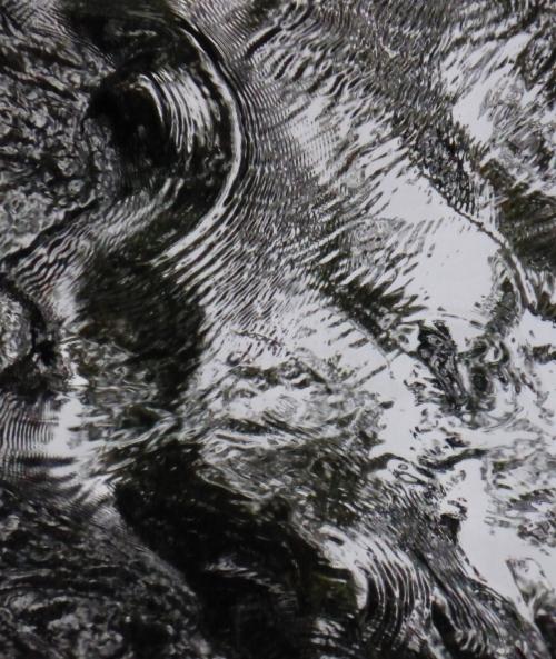 Megalithes et Flora 28 08 2014 237pm.jpg