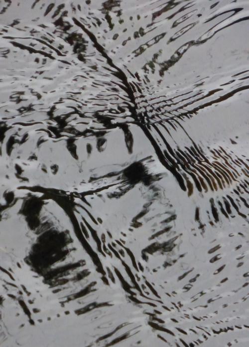 Megalithes et Flora 28 08 2014 324pm.jpg