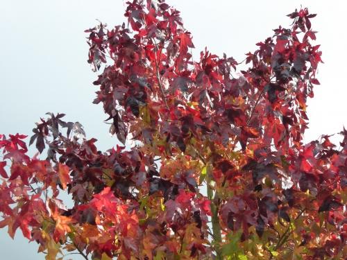 Flora  NOV 2014  EAU 011pm.jpg