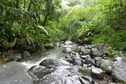 Martinique 2 jan 2015 267pm.jpg