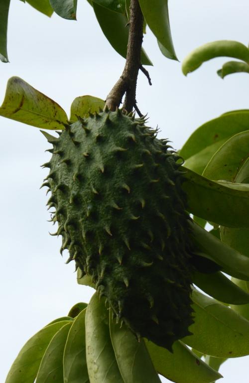 Martinique 2 jan 2015 138pm.jpg