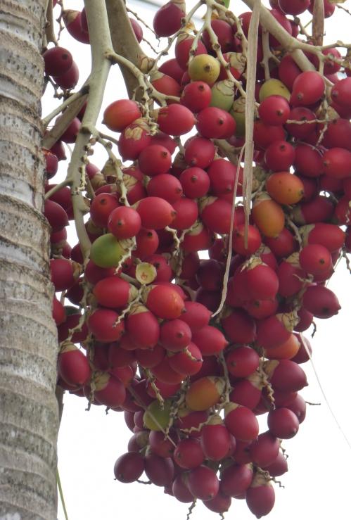 Martinique 2 jan 2015 157pm.jpg