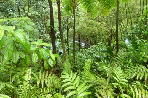 Martinique 2 jan 2015 257pm.jpg