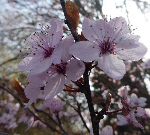 Flora Mars 2015  II 011pm.jpg