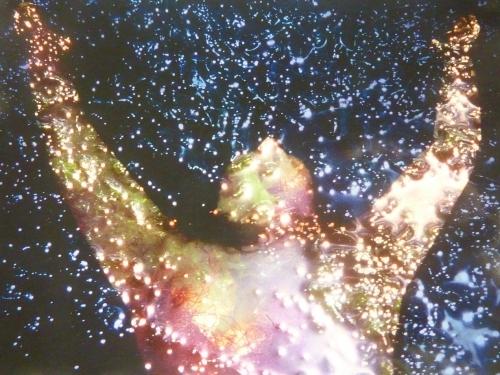 archives photosVerbatim bran du 4386pm.jpg