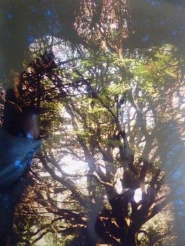 archives photosVerbatim bran du 7507pm.jpg