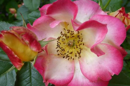 jardin melanges juin 2015 026pm.jpg