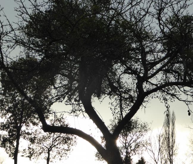La FLORA 6  décembre 2015 343pm.jpg