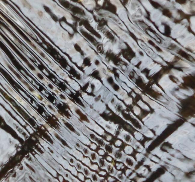 La FLORA 11 DEC 2015 096pm.jpg