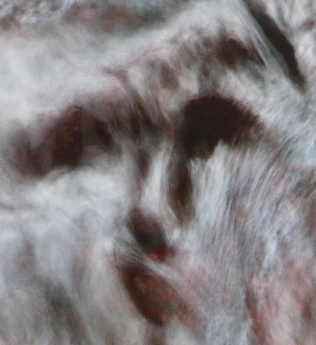 La FLORA 10 dec 2015 671pm.jpg