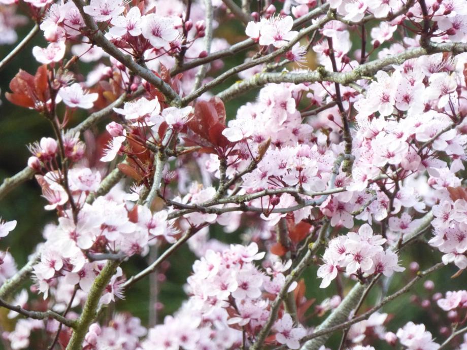 Flora Mars 2016 171pm.jpg