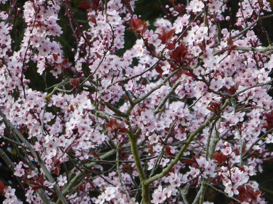 Flora Mars 2016 169pm.jpg