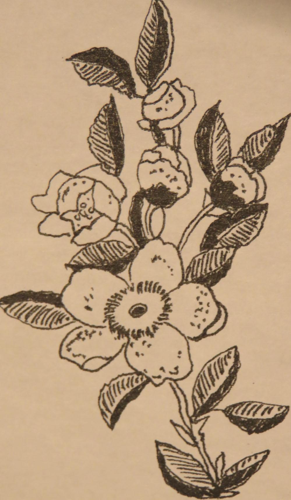 Fleurs d'encre2916 3 005pm.jpg