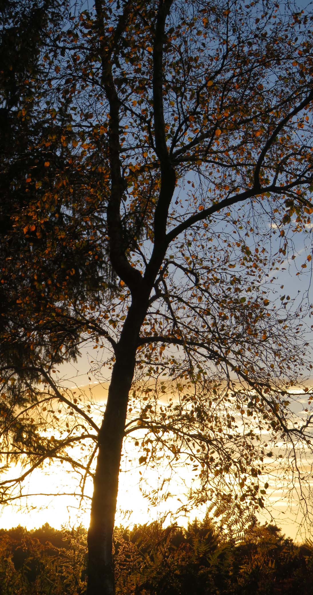 colloque nov 2016 et automne 052pm.jpg