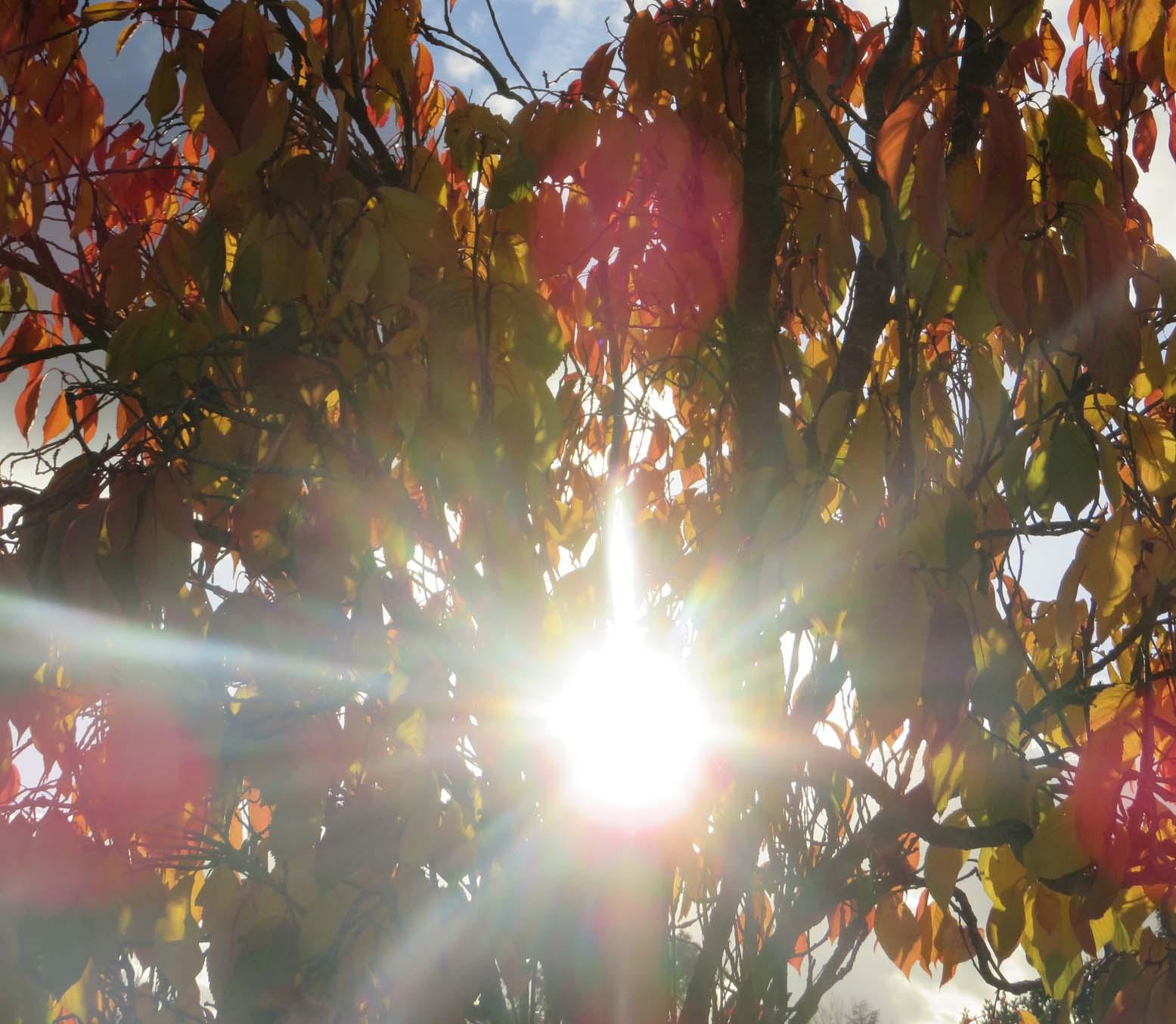 colloque nov 2016 et automne 029pm.jpg