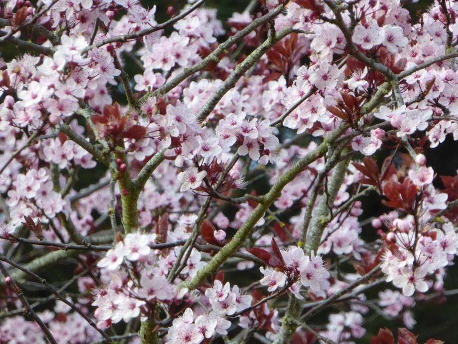 Flora Mars 2016 170pm.jpg