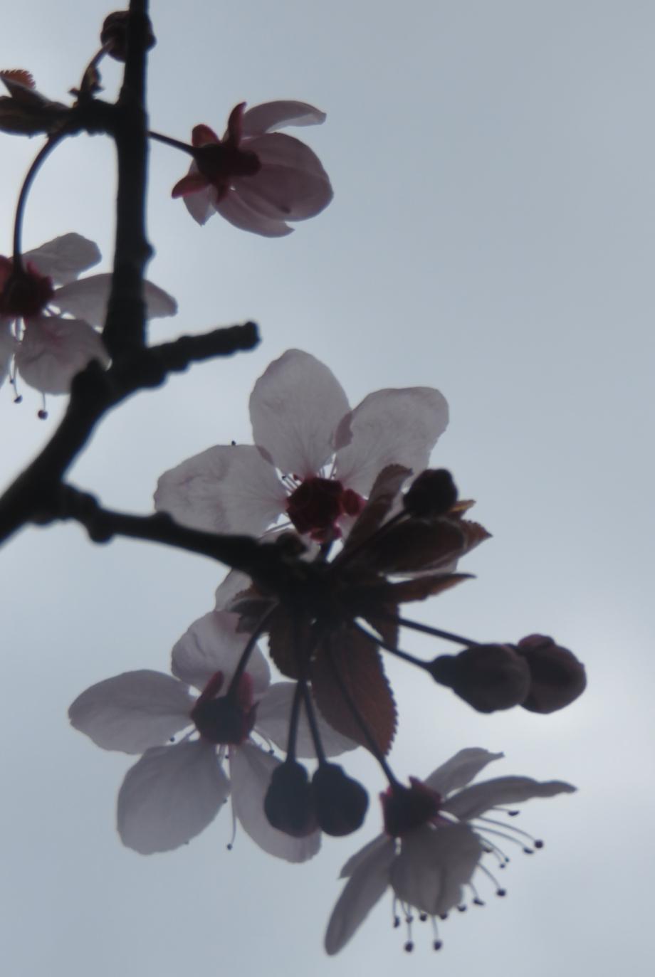 La Flora 26 02 2017 391pm.jpg