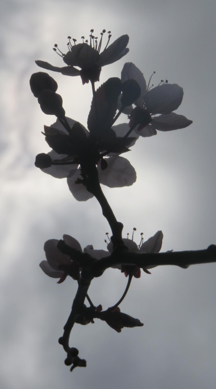 La Flora 26 02 2017 393pm.jpg