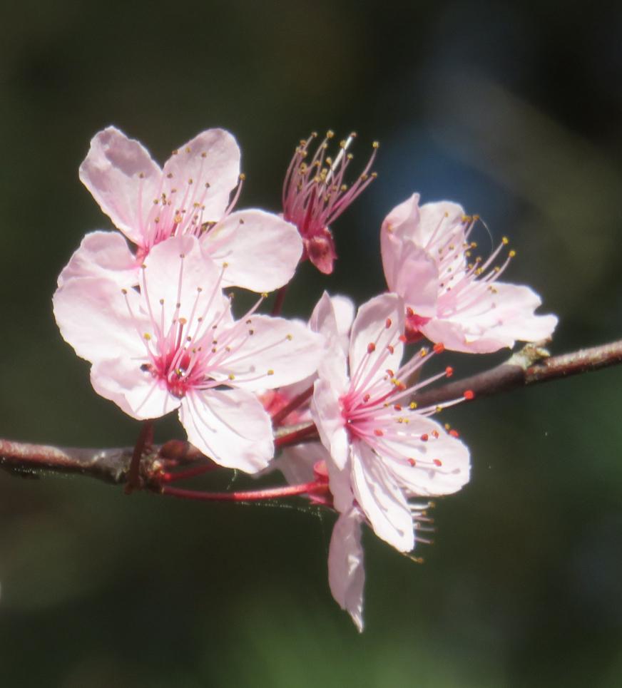 La Flora 03 2017 017pm.jpg