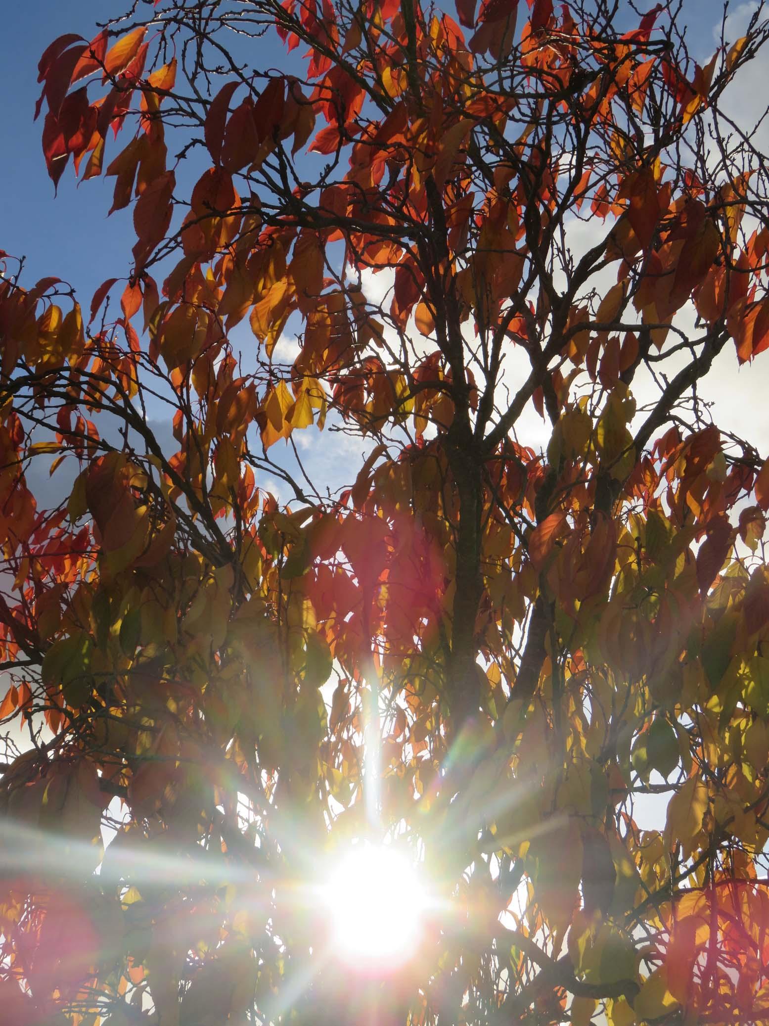 colloque nov 2016 et automne 030pm.jpg